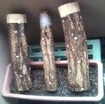 120301椎茸原木