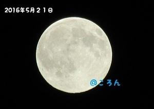160521満月の前日1-1.jpg