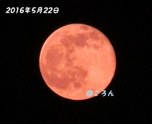 160522満月1-1.jpg